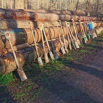 Baumpflanzaktion von Deutschland forstet auf