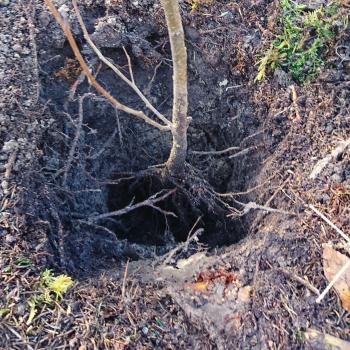 Baumpflanzaktion März 2020