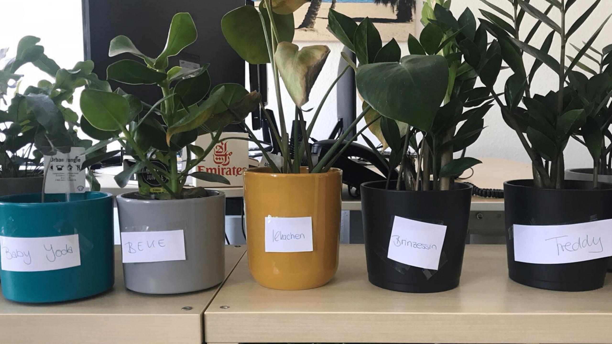 Wenn die Kollegen nicht da sind, müssen die Pflanzen herhalten